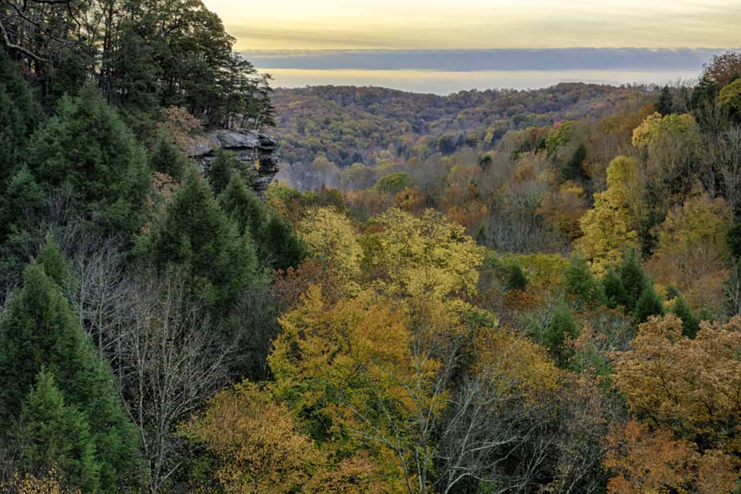 trees in hocking hills ohio
