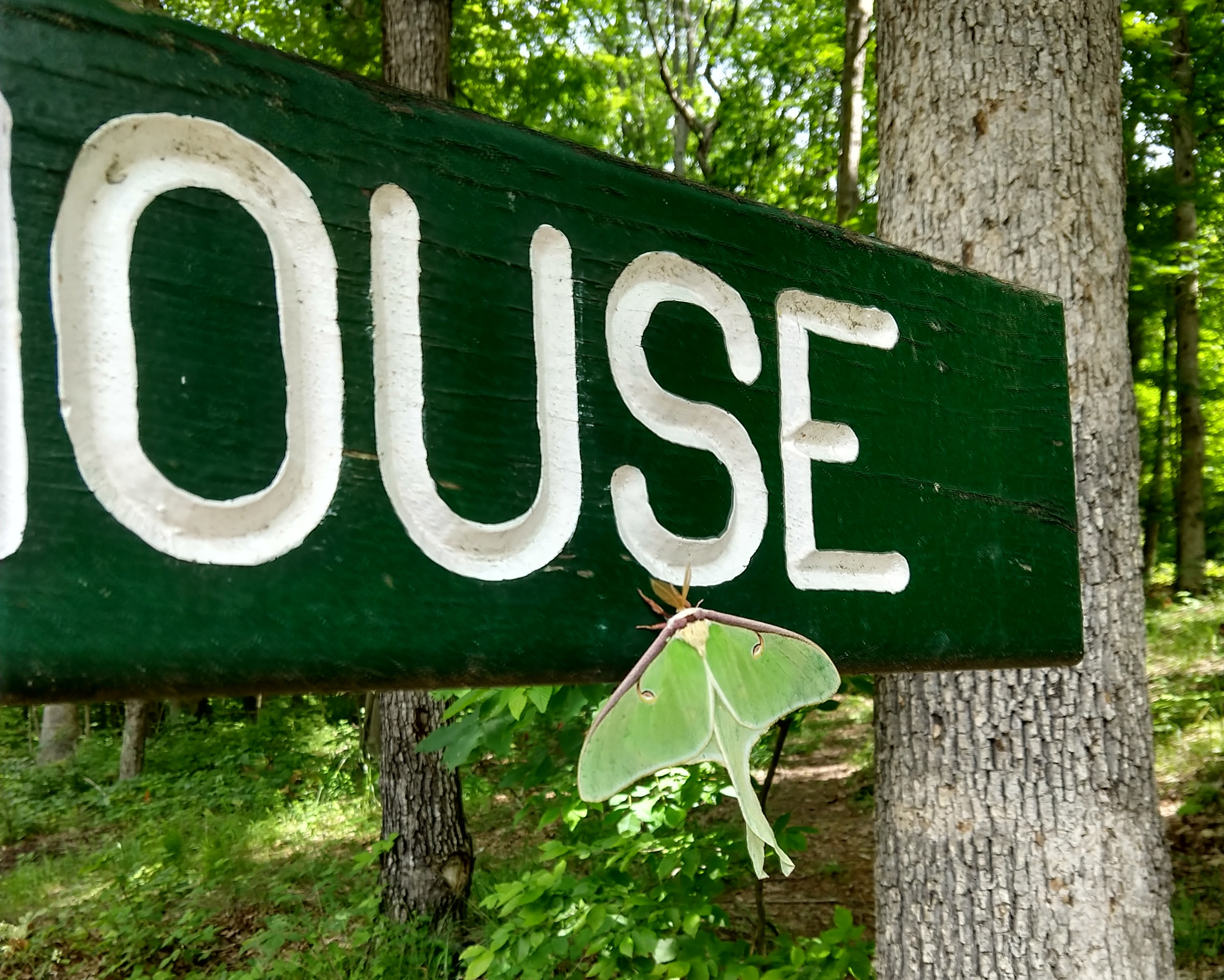 Luna Moth resting on a sign for the Boat House Luxury Romantic Cabin