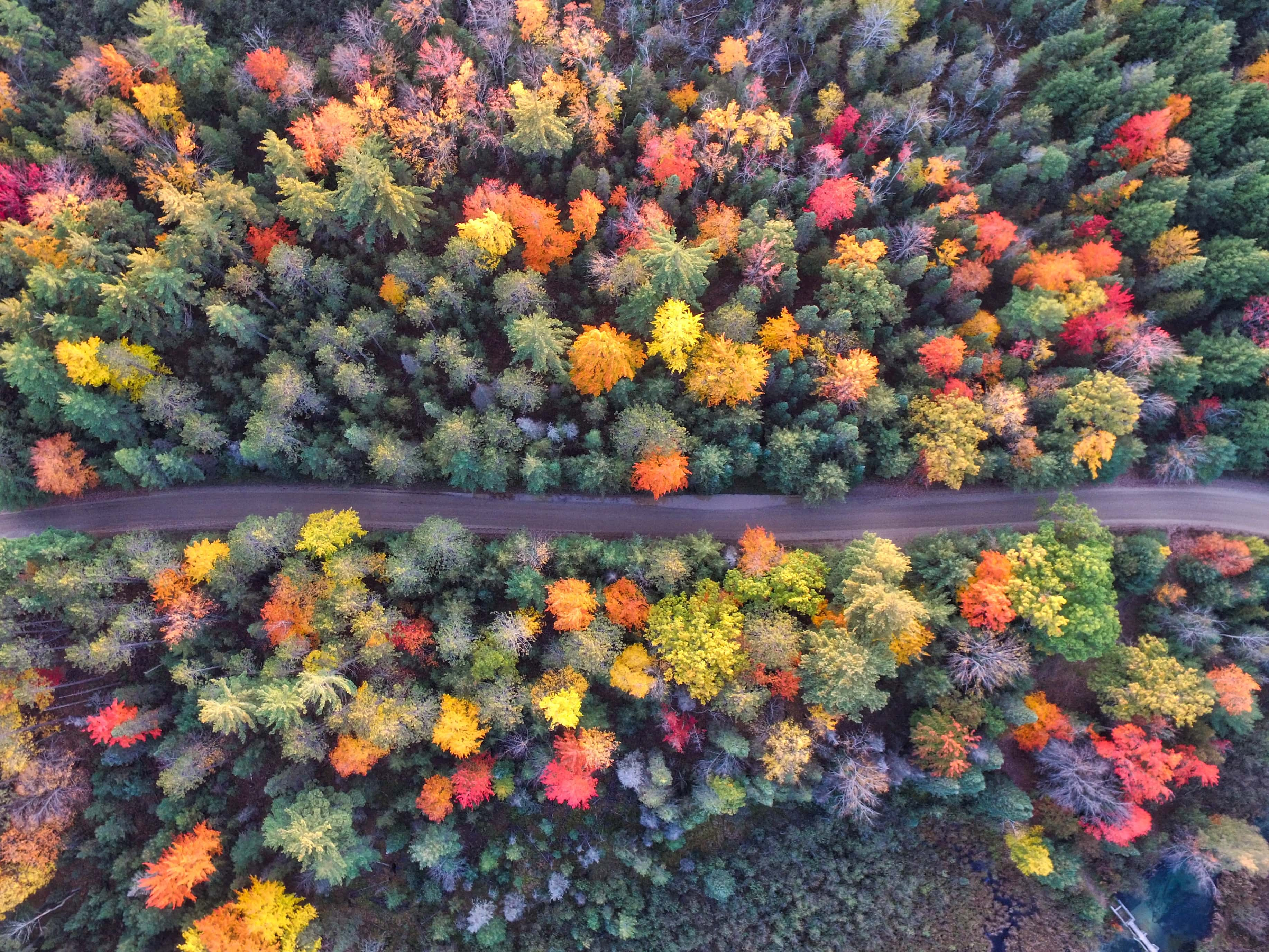 Fall Trees from Above