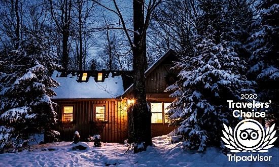 Snowy Pine trees and cabin, warm light coming from the window